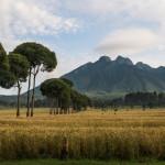 Blick auf einen Vulkan in der Ferne in Ruanda