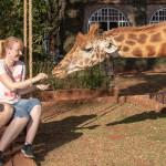 Unsere Gäste futtern die Zebras in Afrika
