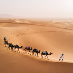 Tuareg with camels walk thru the desert on the western part of The Sahara Desert in Morocco, Africa