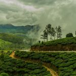 Enchanting Travels India Tours Munnar Tea Plantation, Highlights of India