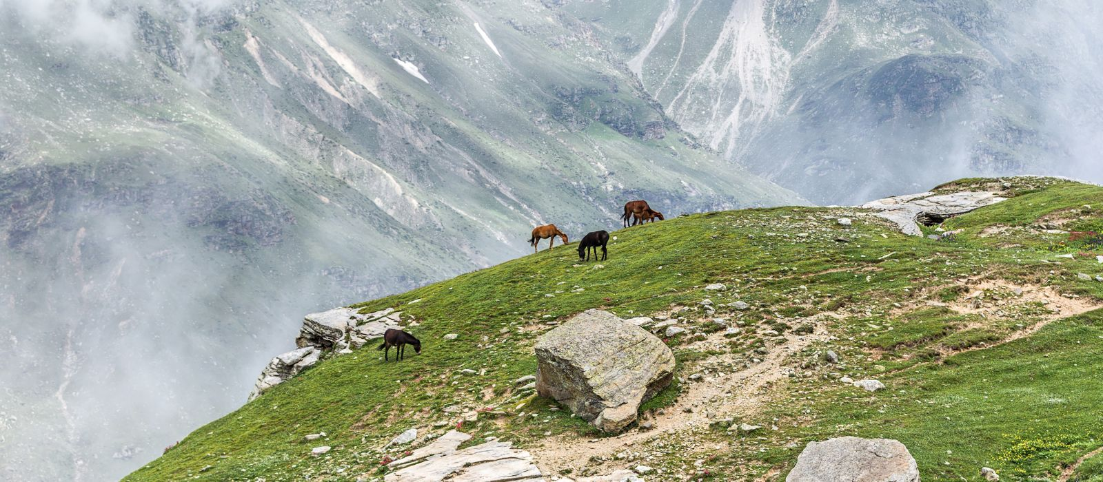 A herd of horses grazing, Rohtang Pass, Leh - Manali Highway - Tibet, Himalayas, Himachal Pradesh, Northern India