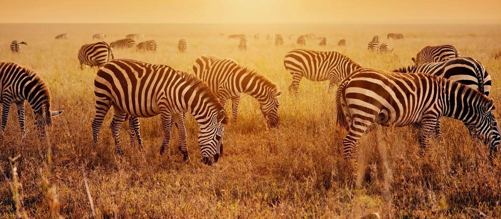 South African Safari Tours Reviews