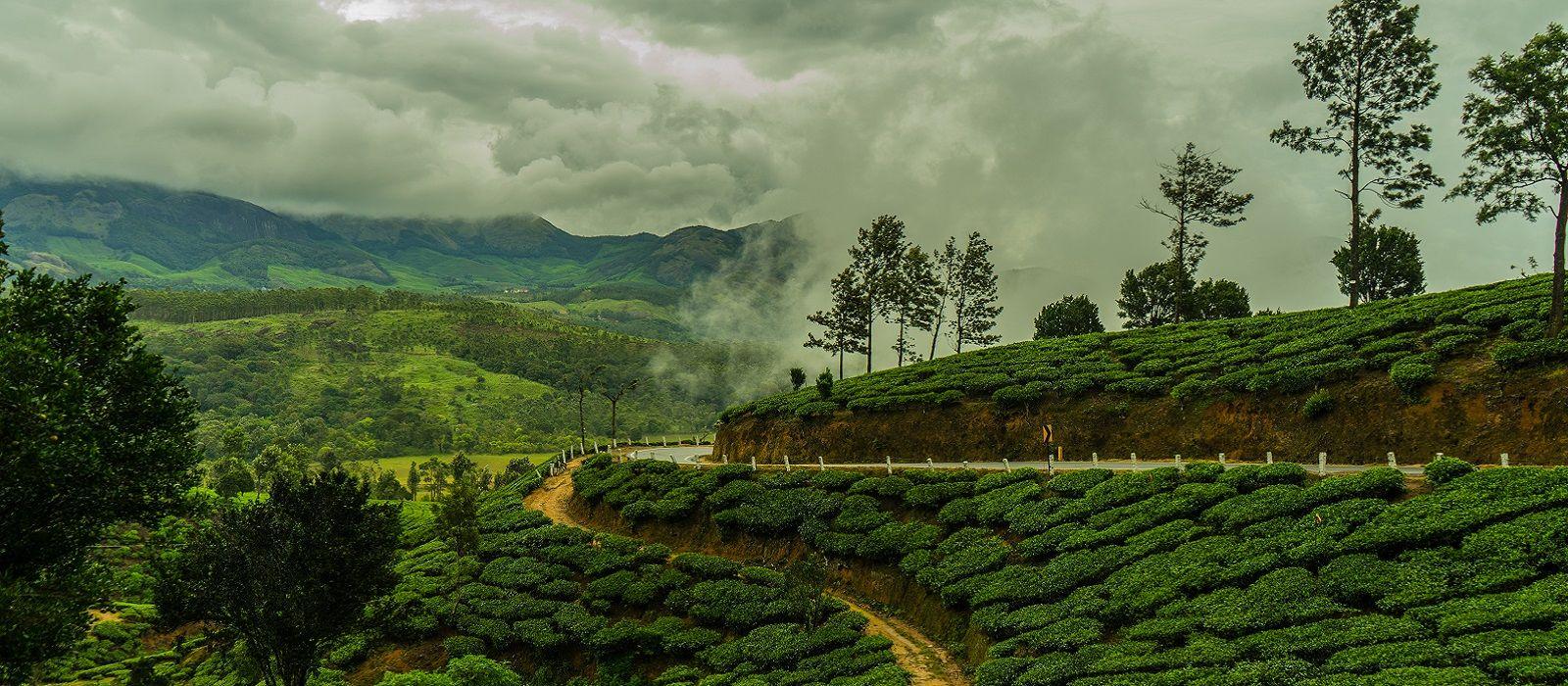 Munnar Tee-Plantage während des Monsuns im indischen Kerala