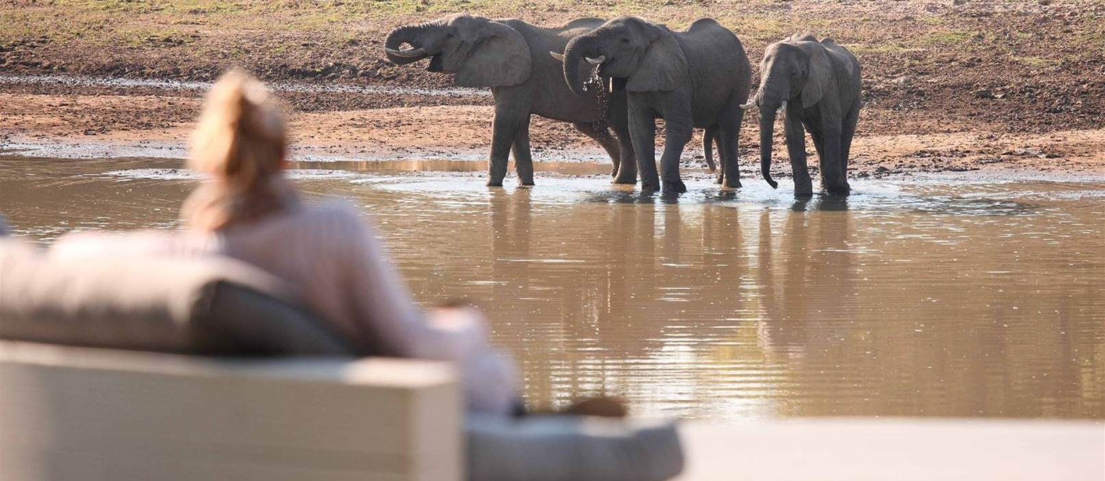 Elephants at the watering hole in Luangwa