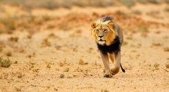 Enchanting Travels Guest Review Africa Safari