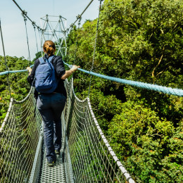 Canopy walk at Nyungwe - things to do in Rwanda