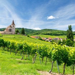 Things to do in France - vineyards
