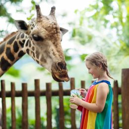 Enchanting Travels Asia Tours Singapore Tourism Children feed giraffes in tropical safari park