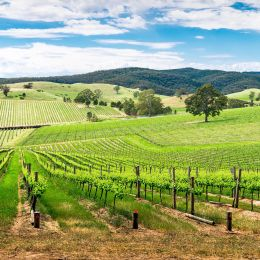 Things to do in Australia - Barossa Valley