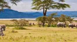 magischer Lake Baringo in Kenia