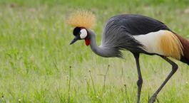 Exotischer Vogel in Mikumi, Tansania