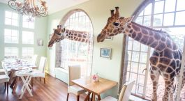 Enchanting Travels - Kenya Resien- Nairobi - Giraffe Manor - Essbereich