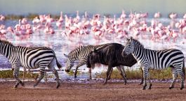 Highlights of Tanzania with Enchanting Travels