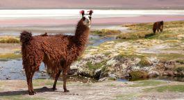 South america- exploring bolivia