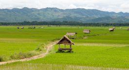Enchanting Travels Laos Tours Luang Namtha