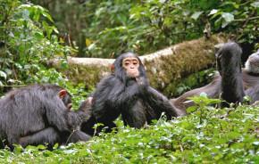Enchanting Travels Wildlife Tour