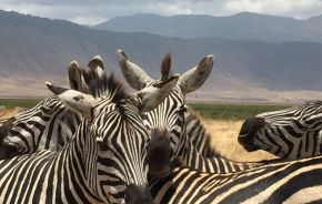Enchanting Travels Africa Tours Guest Images Tamra Benjamin (6) - Africa Holiday