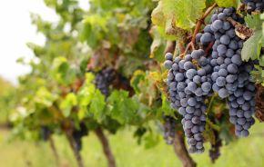 Plantations and Vineyards