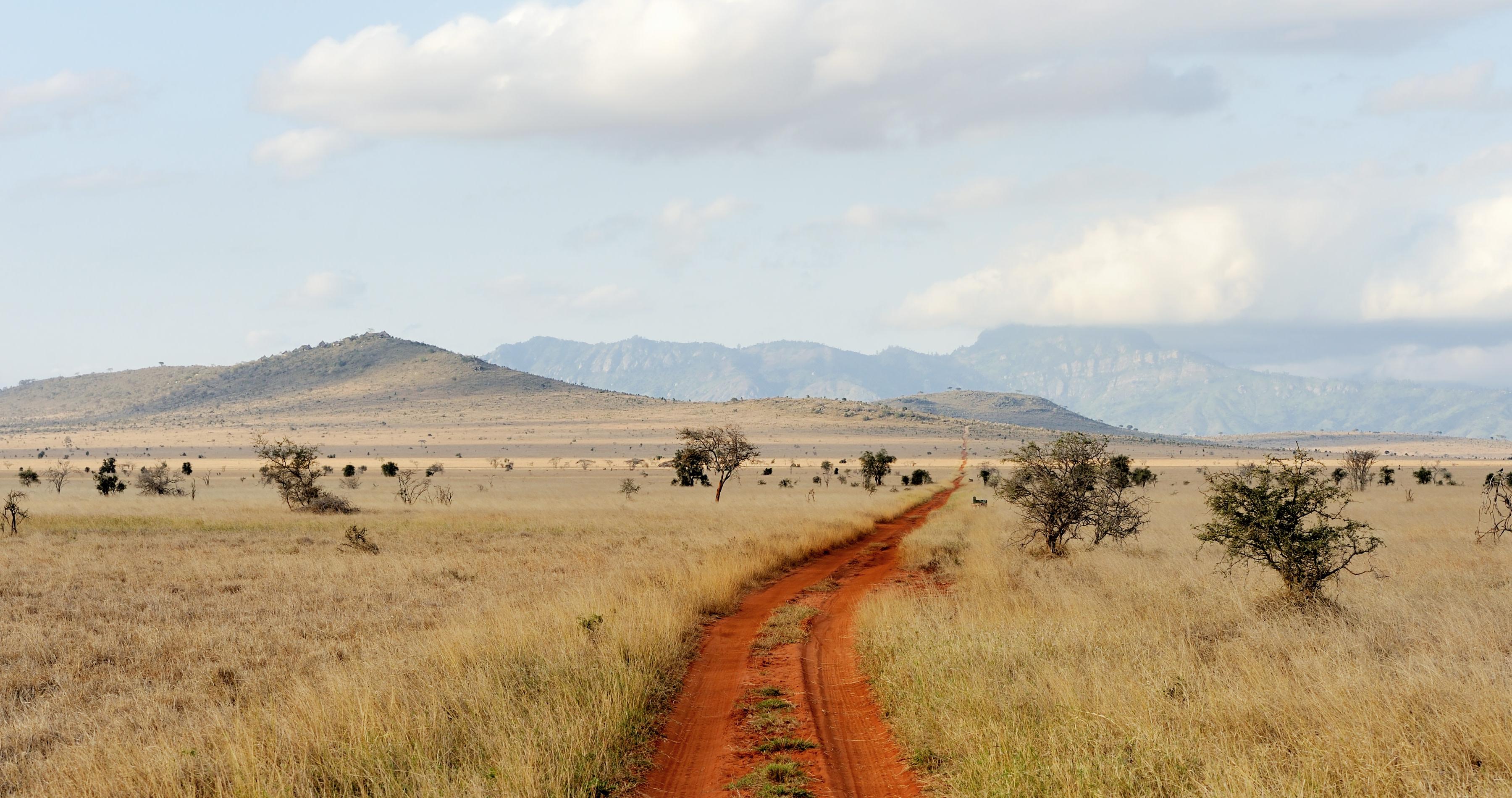 Savannah landscape in the National park in Kenya, Africa