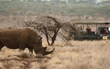 Top 10 Things To Do in Kenya - wildlife safari in Lewa