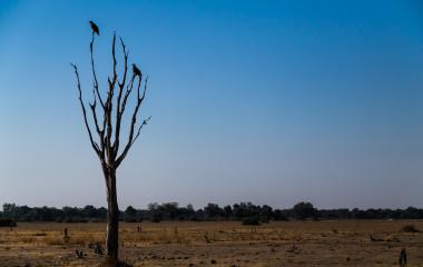 Two Tawny Eagles in Petauke, Zambia