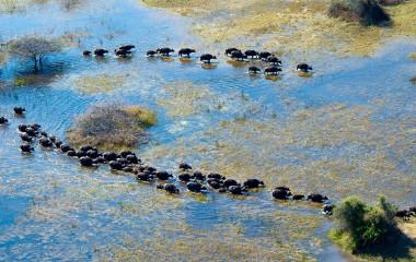 Botswana Safaris