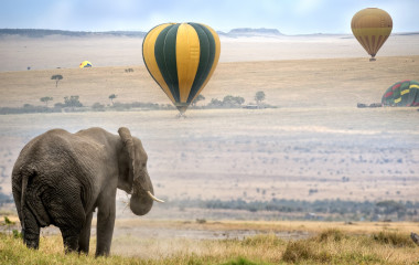 Enchanting Travels African elephant , foggy morning, hot air balloons landing on background, Masai Mara National Reserve