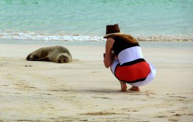 Frau im Kleid kniet am Strand und fotografiert eine Robbe auf den Galapagos-Inseln in Ecuador