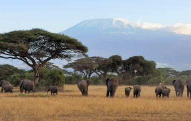 Enchanting Travels - Tanzania Tours - West Kilimanjaro - Elephant with Mount Kilimanjaro in the background