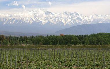 Weinanbau Region Mendoza in Argentinien