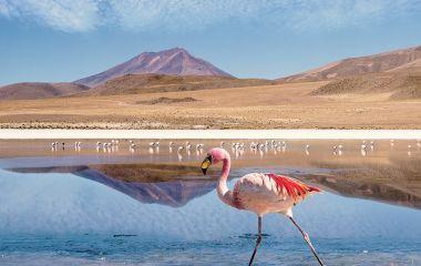 Planschender Flamingo