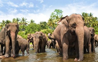 Sri Lanka Safari im Yala Nationalpark: Elefentanherde