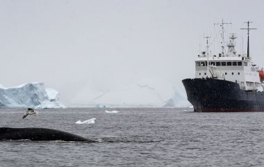 Enchanting Travels Antarctica Tours A humpback whale