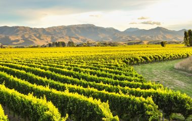 Enchanting Travels New Zealand Tours Row of beautiful grape yard before sunset with mountain in Blenheim, New Zealand 3