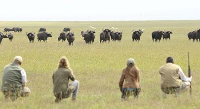 Walking Safari Animals