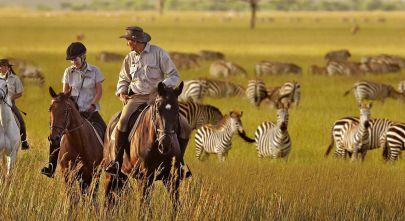 serengeti-national-park-zebras