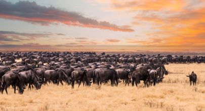 Enchanting Travels Wildebeest migration in Serengeti national Park,Tanzania