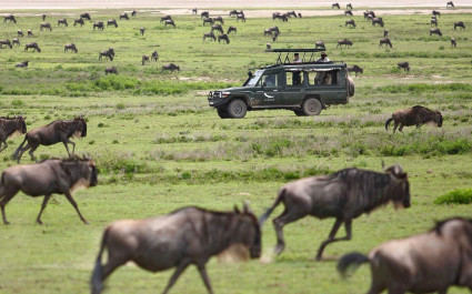 Great migration in the Northern Serengeti Tanzania