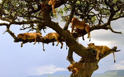 Enchanting Travels African safari parks to see - Lion family Serengeti Tanzania