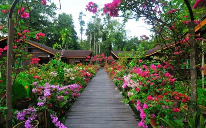 Blumengesäumter Holzsteg in der Abai Jungle Lodge in Kinabatangan, Malaysia