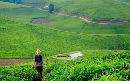 Plantation in Rwanda - best places to visit in 2019
