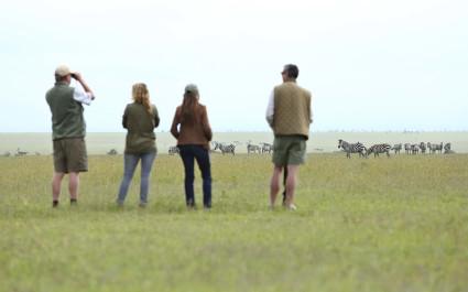 Vier Touristen auf Wandersafari beobachten Zebras im Laikipia-Reservat in Kenia