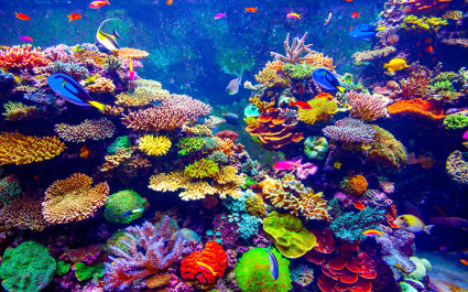 Unterwasseraufnahme von bunten Korallen und Fischen
