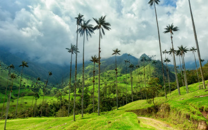 Kaffeeplantagen und Palmen in der Kaffeeanbauregion von Kolumbien