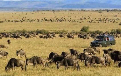 Große Gnu-Wanderung in der Serengeti, Afrika