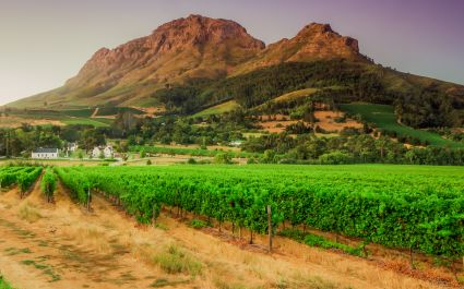 vineyards and Helderberg Mountain near Stellenbosch at sunset, Western Cape, South Africa