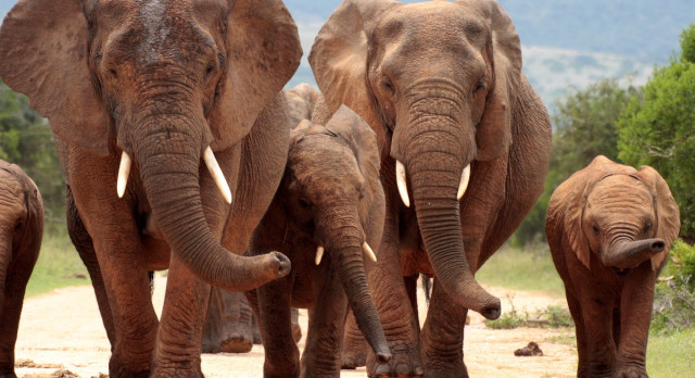 Winter in South Africa - Enchanting Travels South Africa Tours Addo elephant national park,eastern cape