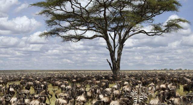 Tanzania Great Migration Africa Tour
