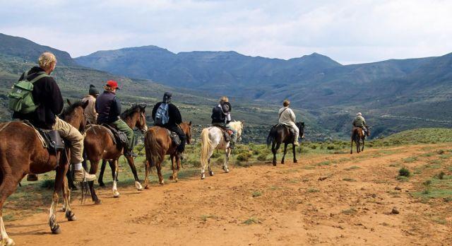 Basotho Ponys auf einer Gebirgsstraße