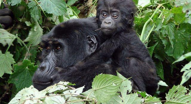 Highlights of Rwanda